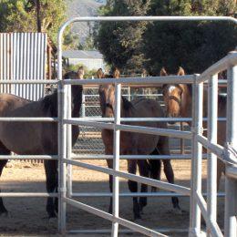 Horse Corrals